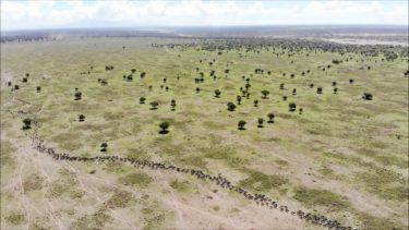 【ドローン空撮】 アフリカ・タンザニア 想像を絶する大自然のスケール  Africa tanzania