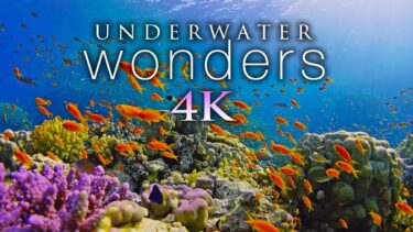 *NEW* 11 HOURS of 4K Underwater Wonders + Relaxing Music – Coral Reefs & Colorful Sea Life in UHD