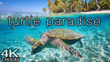 TURTLE PARADISE 4K Undersea Ambient Nature Relaxation Film + Jason Stephenson Meditation Music 🐢🥰